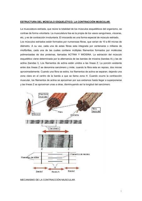 1 Estructura Del Mãšsculo Esquelã Tico La