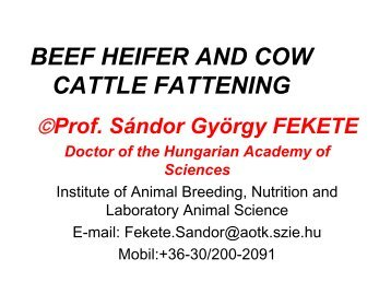 BEEF HEIFER AND COW CATTLE FATTENING - Dietvet-Holistic ...