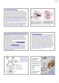 The occipital The occipital lobes Occipital lobe - Mahidol University - Page 2