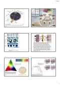 The occipital The occipital lobes Occipital lobe - Mahidol University - Page 3