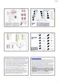 The occipital The occipital lobes Occipital lobe - Mahidol University - Page 7