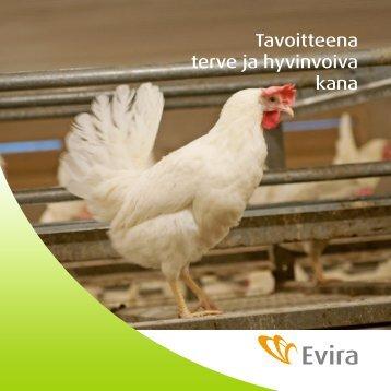 Tavoitteena terve ja hyvinvoiva kana