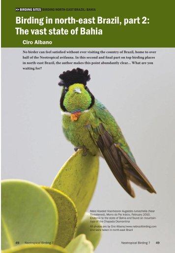 birding in north-east brazil, part 2 - Neotropical Bird Club