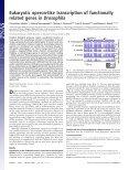 Drosophila Eukaryotic operon-like transcription of functionally ... - Page 2