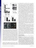 Drosophila Eukaryotic operon-like transcription of functionally ... - Page 6
