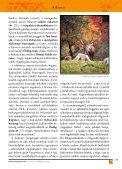 Veszprém és a Bakony – Beszállókártya - Page 7