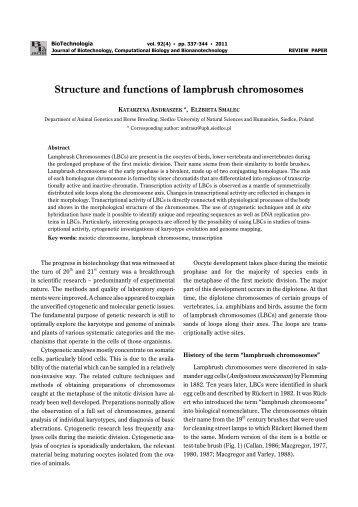 Structure and functions of lampbrush chromosomes - BioTechnologia