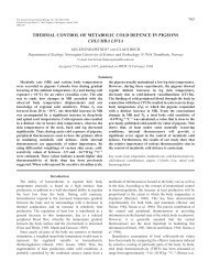 thermal control of metabolic cold defence in pigeons columba livia