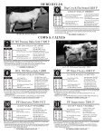 cows & calves - Page 4