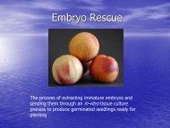Embryo Rescue - Aggie Horticulture