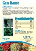 Gen Rame - geofin.vr.it - Page 2
