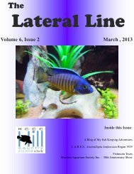 Lateral Line March 2013 - Hill Country Cichlid Club