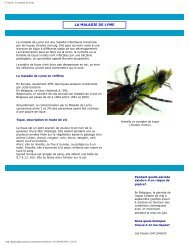 Conseils - La maladie de Lyme