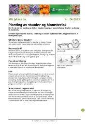Planting av stauder og blomsterløk - Hageselskapet