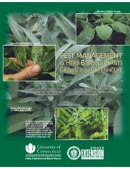 Pest Management for Herb Bedding Plants Grown ... - Hort.uconn.edu