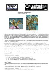 Coral Nursery Transplant Report October ... - Eco Koh Tao