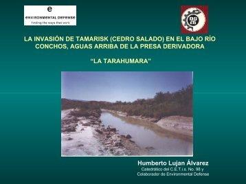 la invasión de tamarisk - Environmental Defense Fund