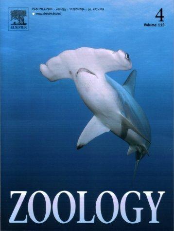 Response of juvenile scalloped hammerhead sharks to electric stimuli