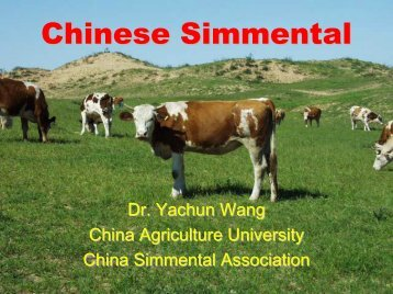 Chinese Simmental - WSFF