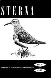Sterna, bind 16 nr 4 (PDF-fil) - Museum Stavanger