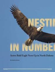 Nesting in Numbers: Active Bald Eagle Nests Up in North Dakota
