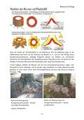 Visuelle Baumkontrolle - Seite 6