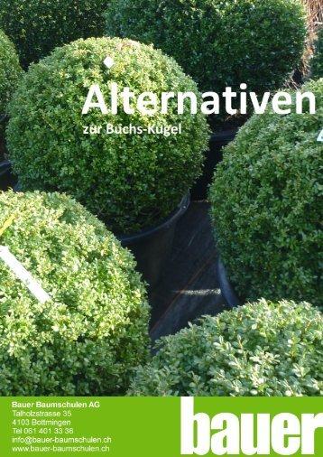 bauer baumschulen ag alternative zum buchsbaum seite 1. Black Bedroom Furniture Sets. Home Design Ideas
