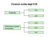 Funzioni svolte dagli FcR