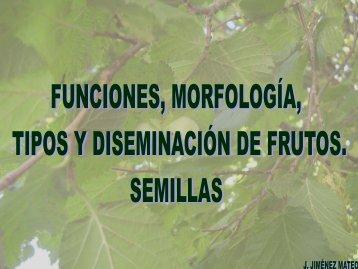 Funciones, morfología, tipos y diseminación de frutos ... - Educarm