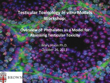 Overview of Testicular Tox Models - ILSI Health and Environmental ...