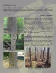 Preparing for Emerald Ash Borer: A Landowner's Guide to Managing ... - Page 2