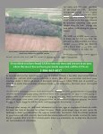 Preparing for Emerald Ash Borer: A Landowner's Guide to Managing ... - Page 7