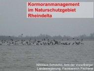 Schotzko: Kormoranmanagement im Naturschutzgebiet