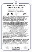 Acer shirasawanum 'Autumn Moon' - Seite 2