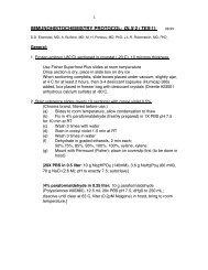 IMMUNOHISTOCHEMISTRY PROTOCOL: DLX-2 (TES-1)