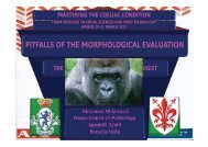 PITFALLS OF THE MORPHOLOGICAL EVALUATION