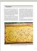 MAHEMESINDUS - Põllumajandusministeerium - Page 3