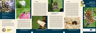 Motýli význačných biotopů - Národní park Podyjí