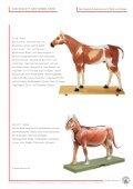 Skelett-Anatomie DAS SKELETT - SOMSO - Page 6