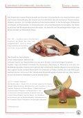 Skelett-Anatomie DAS SKELETT - SOMSO - Page 7