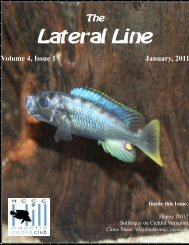 Lateral Line January 2011 - Hill Country Cichlid Club