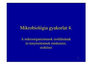 Mikrobiológia gyakorlat 4.