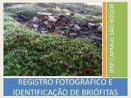 registro fotográfico e identificação de briófitas - Fernando Santiago ...