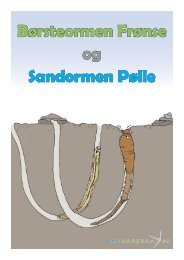 Børsteormen Frønse og Sandormen Pølle - Mit Vadehav