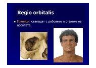 Regio orbitalis