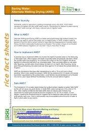 Alternate Wetting Drying - Rice Knowledge Bank - International Rice ...