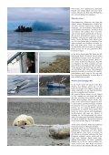 Polarbär-Expedition in der Arktis - Fotoundreisen.de - Seite 2
