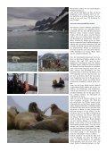 Polarbär-Expedition in der Arktis - Fotoundreisen.de - Seite 4