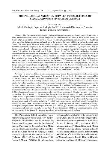 morphological variation between two subspecies of cebus