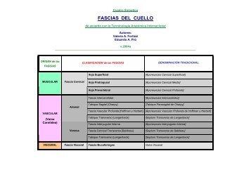 FASCIAS DEL CUELLO - FMV